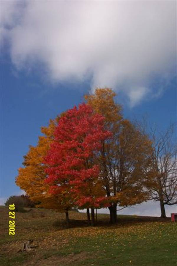 Road Trip Planner >> The 5 Coolest Trees In Southern West Virginia - Visit ...